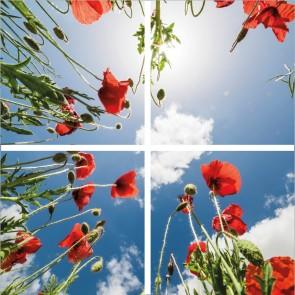 FOTOPRINT afbeelding klaproos verdeeld over 4 panelen 595 x 595 mm