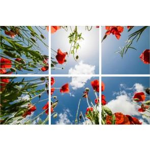 FOTOPRINT afbeelding klaproos verdeeld over 6 panelen 595 x 595 mm