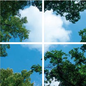 FOTOPRINT afbeelding wolk-bos verdeeld over 4 panelen 595 x 595 mm